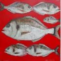 Tableau déco poissons Dorades sur fond rouge- 70x70 cm